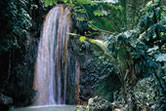 Diamond Falls & Tropical Gardens