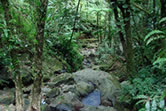 Edmund Rainforest Trail